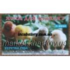 Ясли ( брудер ) для цыплят Курочка Ряба